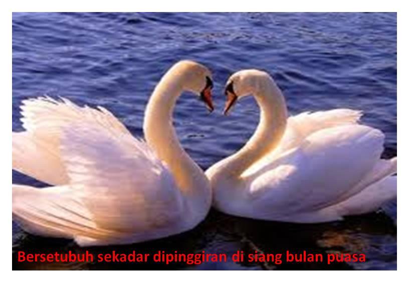 foto bersetubuh cewek indonesia   melrosecottage co uk zoloft